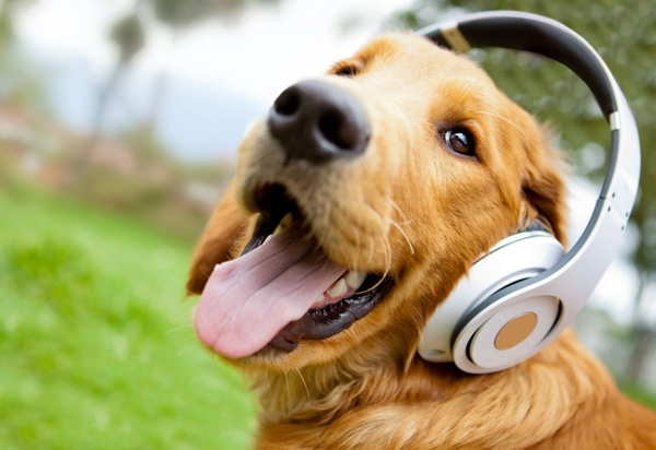 Cute dog listening to music